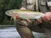Mararoa River Rainbow