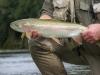 Mararoa River Rainbow